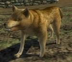 lotro-wolf.jpg