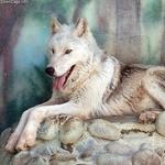 wolf500_3856.jpg